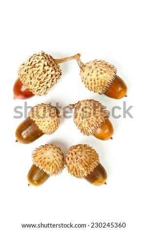 Acorns isolated on white background - stock photo