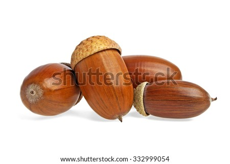 Acorns on a white background - stock photo