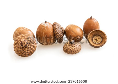 Acorns on a white background. The acorn, or oak nut, is the nut of the oaks and their close relatives (genera Quercus and Lithocarpus, in the family Fagaceae). - stock photo