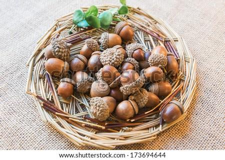 Acorns on the nest - stock photo