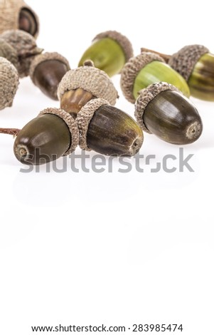acorns on white with reflection