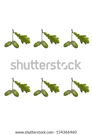 Acorns row pattern - stock photo
