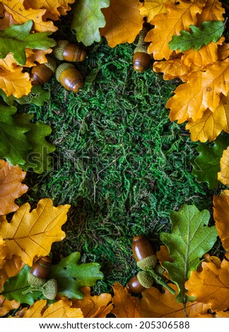 Acorns with autumn leaves on moss background - stock photo