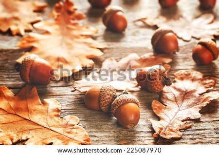 acorns with leaves dark wood background. tinting. selective focus