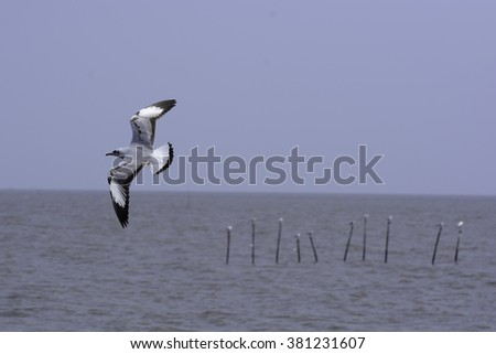 Action of Seagull