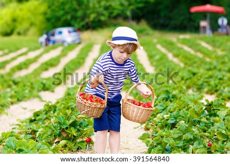 Active little kid boy picking and eating strawberries on organic bio berry farm in summer, child on warm sunny day. Harvest fields in Germany. Healthy food for children. - stock photo