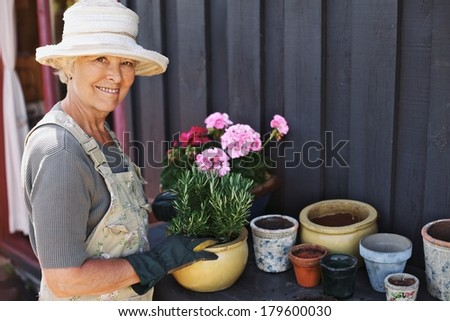 Active senior woman potting some plants in terracotta pots on a counter in backyard. Senior female gardener planting flowers in pots - stock photo