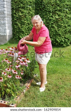 Active senior woman watering her echinacea flowers  - stock photo
