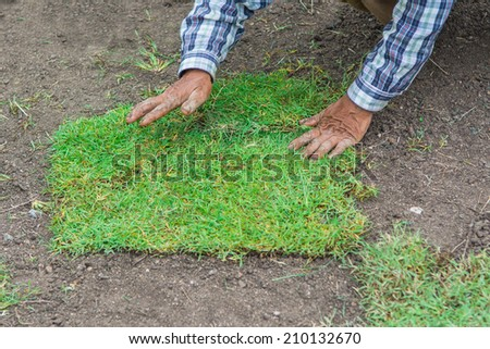 active worker is planting the new grass on yard - stock photo