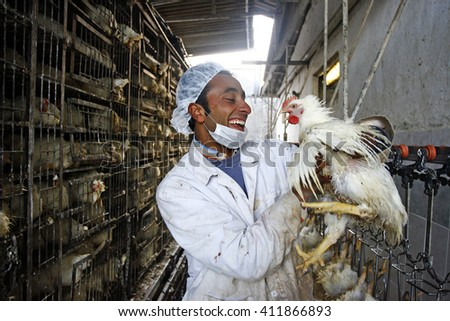 Adanapazari,Turkey - Jully 27,2009 : Chicken cutting factory as part of Islamic rituals.Edible animals in Islam is cut by hand.