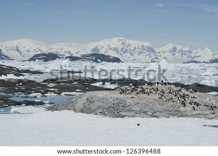 Adelie penguin colony on a deserted island Antarctic spring. - stock photo
