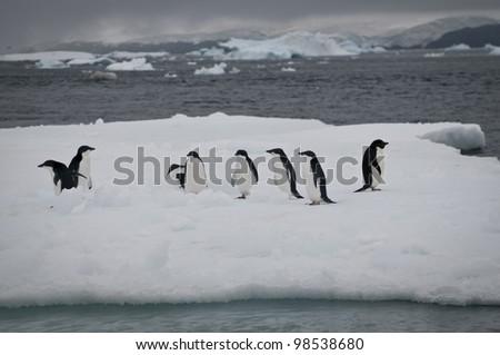 Adelie Penguin in Antarctica - stock photo