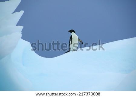 Adelie Penguin on an Iceberg, Paradise Island, Antarctica - stock photo