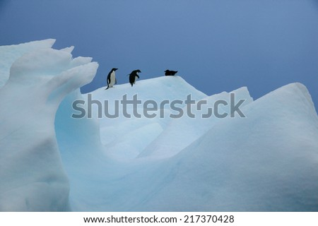 Adelie Penguins and Southern Giant Petrel, Paradise Island, Antarctica - stock photo