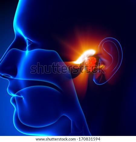 Adenoids - Ear - stock photo