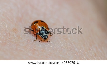 Adonis' Ladybird (Hippodamia variegata) on a person's hand.