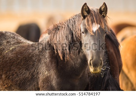 Adoptable horses on site in Oregon near Burns
