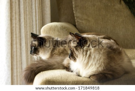 Adopted cats adjusting to a new home - stock photo
