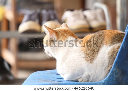 Adorable albino cat sleeping in chiang mai Thailand. - stock photo