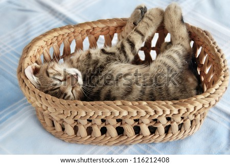 adorable baby cat sleeping in basket over light blue background - stock photo