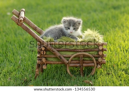 Adorable Baby Kitten Outdoors in Grass - stock photo