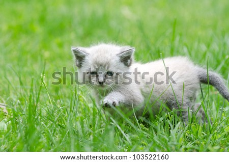 Adorable baby kitten walking through green grass - stock photo