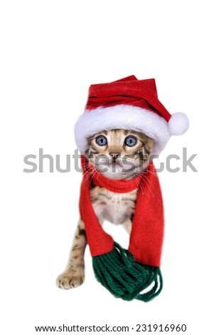 Adorable Bengal kitten in Christmas hat and scarf isolated on white - stock photo