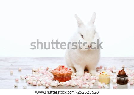 Adorable birthday gift. Closeup image of a cute white bunny sitting by the delicious cupcakes and marshmallows isolated on white background with copy space - stock photo