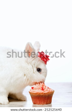 Adorable birthday gift. Closeup side view image of a cute white bunny with a ribbon on head easting the delicious cupcake isolated on white background with copy space - stock photo