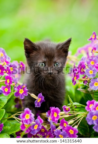 Adorable black kitten sitting in flowers - stock photo