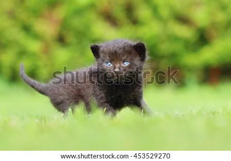 Adorable black kitty - stock photo
