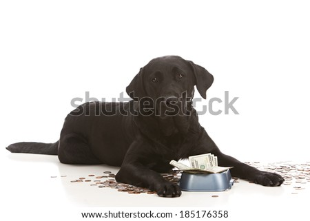 Adorable black lab puppy by her food dish filled with money.  Isolated on white with room for your text.   - stock photo