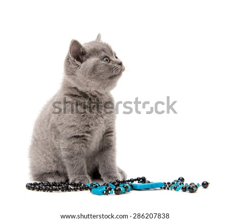 Adorable british little kitten posing on a white with blue jewelry - stock photo