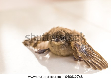 Adorable brown baby bird on white floor