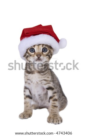 Adorable brown Christmas kitten in Santa stocking hat  isolated on white - stock photo