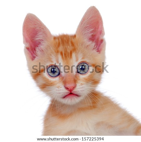 Adorable brown kitten looking at camera isolated on a white background - stock photo