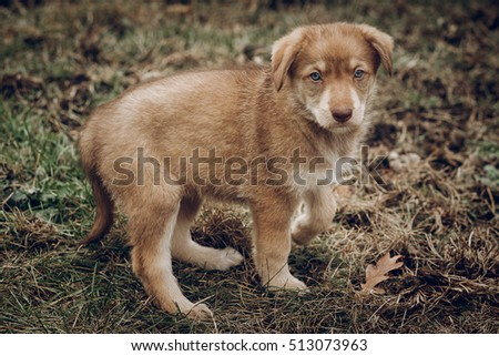 adorable brown puppy with amazing blue eyes on background of autumn park. space for text. faithful friend concept