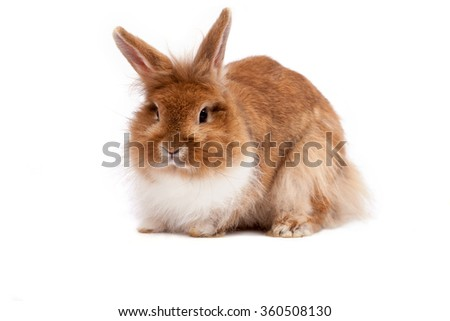 Adorable brown rabbit isolated on white