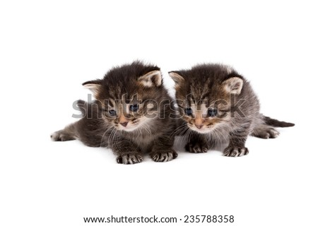 Adorable brown tabby kittens, isolated on white