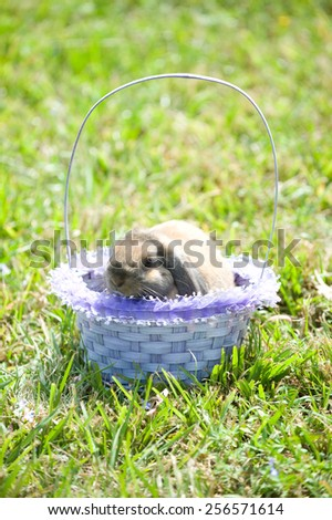Adorable bunny in an Easter basket outdoors - stock photo