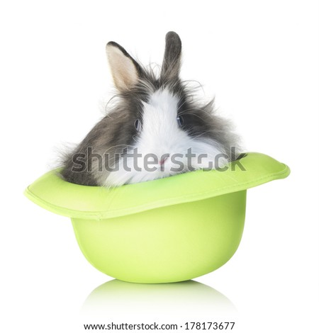 Adorable bunny standing in a green hat, isolated on white