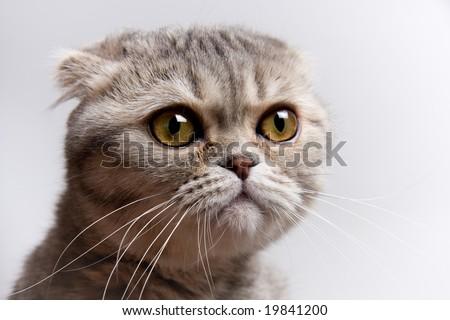 adorable cat - stock photo