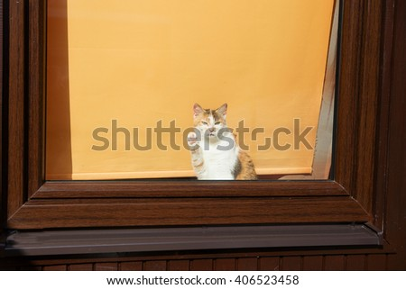 adorable cat greeting with paw the newcommers. - stock photo