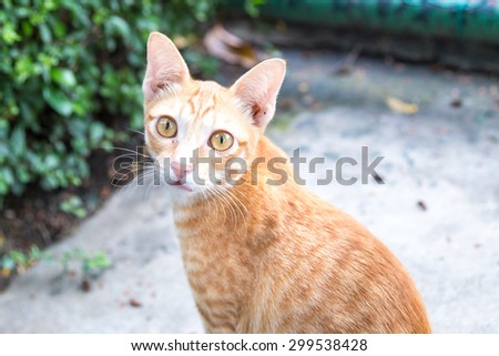 Adorable cat looking at you - stock photo