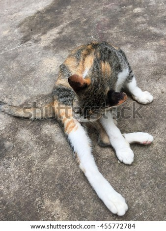 adorable cat on the street - stock photo