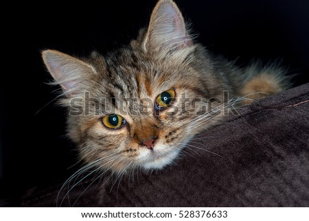 Adorable cat sit on sofa starring at something