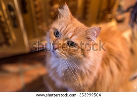 Adorable cat waiting for food - stock photo