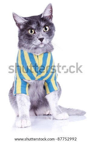 adorable cat withe nice eyes, wearing clothes over white background