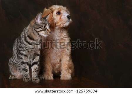Adorable cavapoo puppy with Tabby kitten. - stock photo