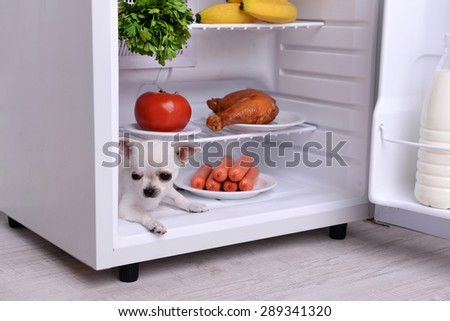 Adorable chihuahua dog in open fridge in kitchen - stock photo